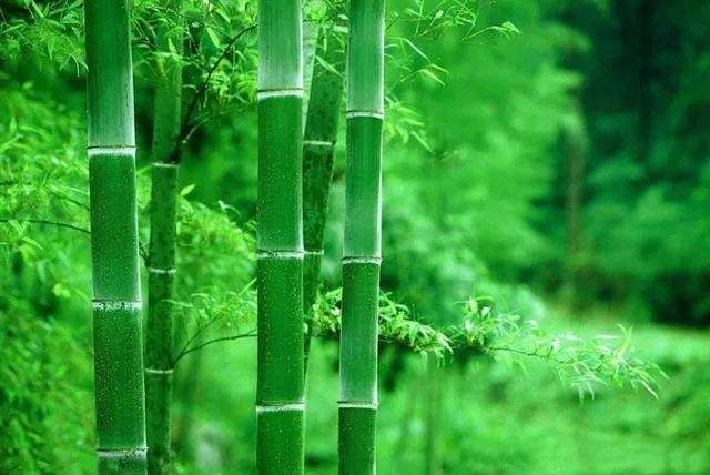 Use Bamboo: Saving the planet but still looking aesthetic